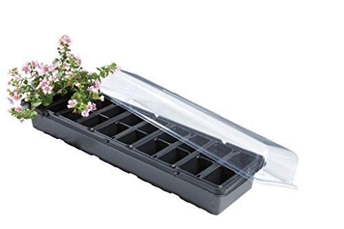 Rebord de fenêtre pour croissance de plantes de serre jardinage