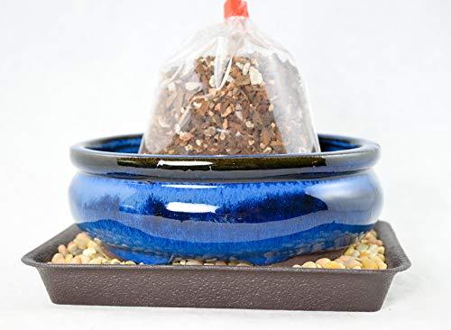 6' Oval Dark Blue Glazed Bonsai / Succulent Pot + Soil + Tray + Rock + Mesh Kit