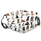 Fashion Comfortable Windproof mask,Picture with Purebred Dogs Australian Sheepdog Belgian Boxer Italian Mastiff Pedigree,Printed Facial Decorations for Adult