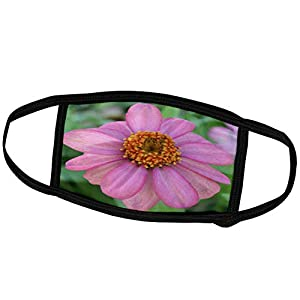 3dRose Patricia Sanders Flowers – Pink Zinnia Flower- Flowers- Floral Photography – Face Masks (fm_36238_3)