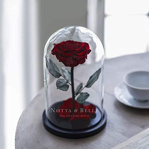 Premium Rosa Eterna 27cm.(Burdeos), «Bonita» Capullo de Rosa, La Bella y la Bestia Rosa Preservada en la cúpula, Original Ideas Regalo romantico para San Valentín, día de la Madre, Novia, Mujer