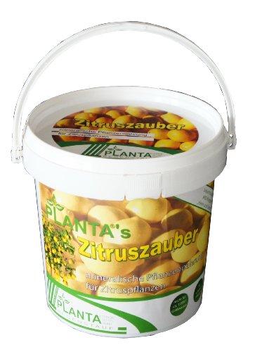 Plantas Zitruszauber