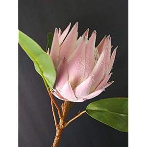 Artificial Protea Stems. Hawaiian Flowers. Tropical Flowers. Flowers are 4.5″ x 4″ Wide – Artificial Flowers #FWB01YN