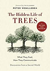 Mindfulness - The hidden Life of Trees