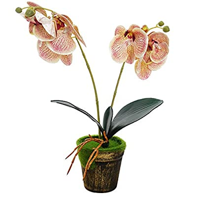 Artificial Orchid Flowers with Vase Real Touch ...