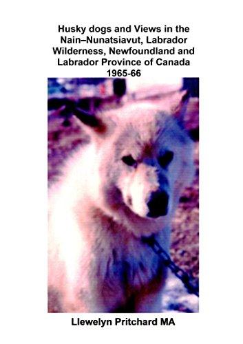 Husky dogs and Views in the Nain – Nunatsiavut, Labrador Wilderness, Newfoundland...