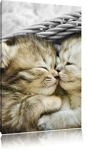 Pixxprint Zwei süße Babykatzen im Korb ALS Leinwandbild/Größe: 120x80 cm/Wandbild/Kunstdruck/fertig bespannt