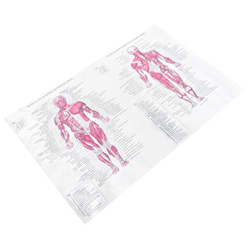 ULTECHNOVO Poster Anatomia Músculo Humano Esqueleto Ligamentos Das Articulações Poster Anatomia Muscular E Esquelético Anatômicos