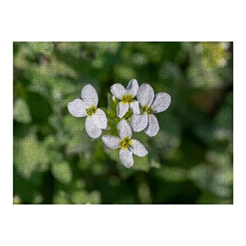 Arabis Caucasica White Flowering Plant -...