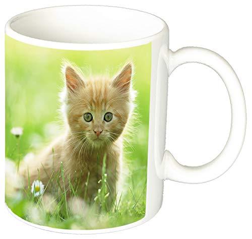 MasTazas Gatitos Gatos Kittens Cats H Tasse Mug