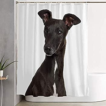 Fabric Bathroom Curtain Sets Close On Italian Greyhound Cut Canine Piccolo Shot Pet Levriero Italiano an Animals Out Wildlife Shower Curtain Bath Curtains with Hooks 72  W x 72  H