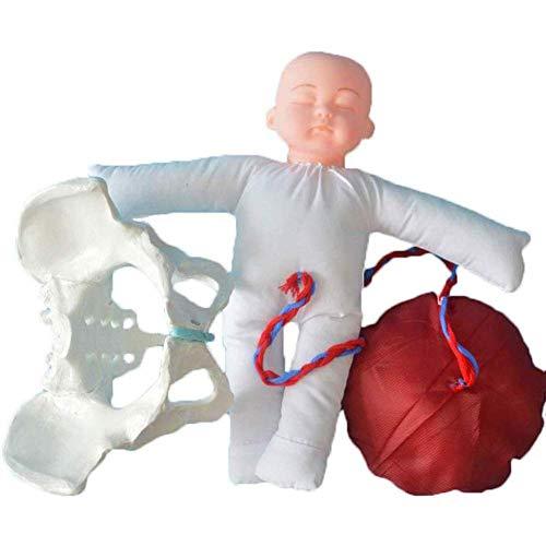 Uziqueif Modelo Femenino De La Pelvis Parto Obstetricia Modelo De Formación Wiht Femenina De La Pelvis Y del Bebé De Ginecología Enseñanza, Parto Simulador con Los Modelos De La Pelvis del Bebé,Model