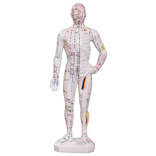 66fit Männliches Akupunkturmodell – 26 cm – Druckpunkte und Meridiane