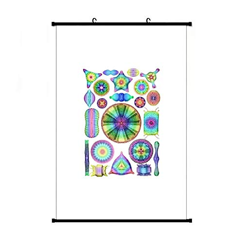 Ernst Haeckel Rainbow Diatoms On Black Apron Anime Living Room Bedroom Home Decoration Gift Fabric Wall Scroll Poster (16x24) Inches