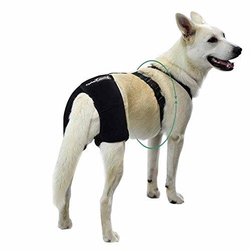 Ortocanis Hüft-Stütze für Hunde - größe M