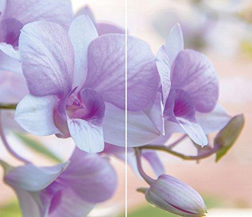 4U Lot de 2protège-plaques Universel, verre trempé, 2x 30x 52cm, orchidée