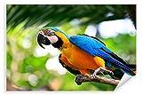 Postereck 3037 - Poster & Leinwand, Papagei Vogel Natur