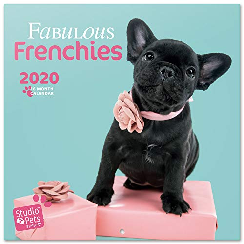 ERIK - Studio Pets French Bulldog 2020 Wall Calendar, 16 Months, 30 x 30cm