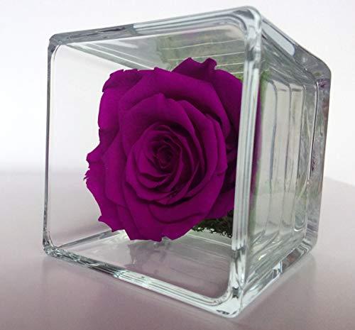 Rose éternelle Prune; Cube, Rose et Mousse végétale stabilisée