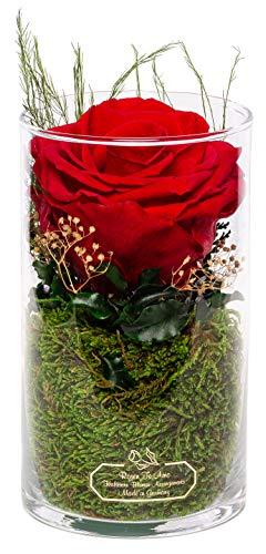 Rosen-Te-Amo 1 konservierte Premium rote Rose in der Vase mit echten Bindegrün; Haltbare Rose im Glas: langlebige Weihnachten Deko 3 Jahre haltbar ohne Wasser