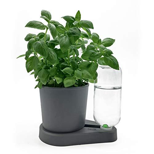 Floris Base Kräuterheld. Natürliche Bewässerung für Küchenkräuter mit Floris Pflanztopf (anthrazit)