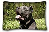 Dana34MalorySoft Funda de Almohada (Animals Cane Corso Perros bozal Boca Abierta curiosidad) Funda de Almohada 20 x 30