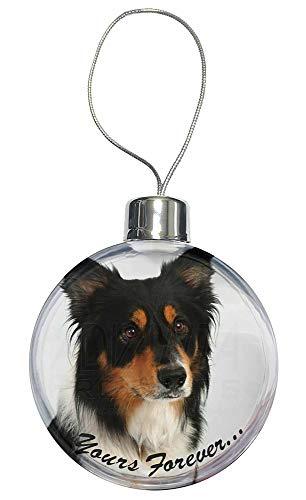 Advanta - Christmas Baubles Tri-Color Border Collie Dog \ für Immer Dein.\ Weihnachtsbaum Flitterdekorat