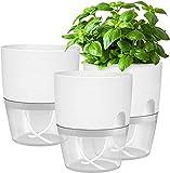 Set di 3 vasi per erbe aromatiche da cucina, per davanzale, per...