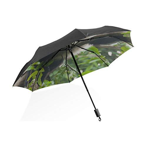 Paraguas Grande para Mujeres Panda Gigante Coma Hojas de bambú Paraguas Plegable...