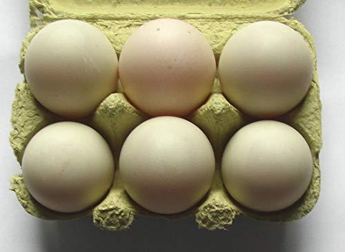 Enten-Eier aus deutscher Freiland Haltung, 10 + 2 Eier, Duck Eggs direkt vom Bauernhof, tages-frische Delikatesse aus der Altmark, zum essen oder ausbrüten
