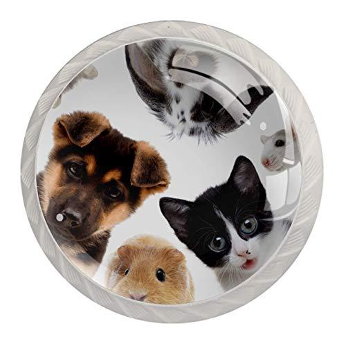 Haustier Hund Katze Kaninchen [4 Stuck] Küchenknöpfe - Türknopf Knauf für Schrank, Schubladenknopf, Türknäufe, Möbelknopf