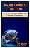 DWARF GOURAMI CARE GUIDE: Dwarf Gourami Care,...
