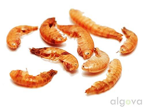 Algova Gammarus Bachflohkrebse - 3