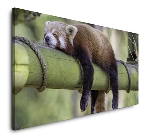Paul Sinus Art schlafender roter Panda 120x 60cm Panorama Leinwand Bild XXL Format Wandbilder Wohnzimmer Wohnung Deko Kunstdrucke