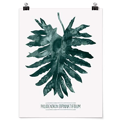 Bilderwelten Poster Wall Art Smaragdgrüner Philodendron Bipinnatifidum Glänzend 60 x 45cm