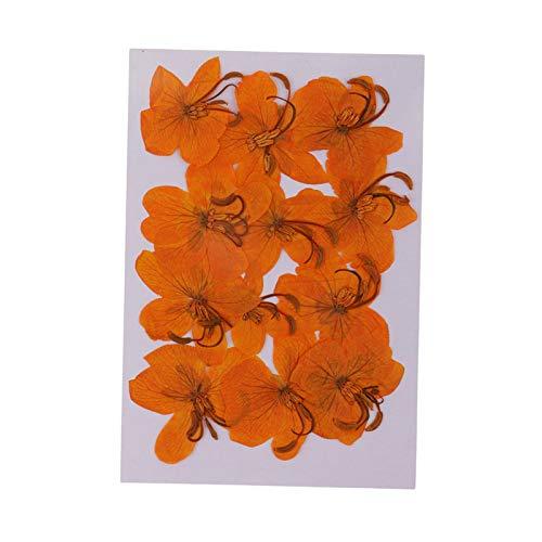 WQAZ Prägung 12 stücke Natürliche getrocknete gepresste Blumen Cassiae Blumen DIY Scrapbooking Crafts Vasenfüllung