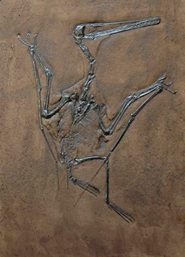 Fossil eines Flugsauriers Replik in Museums Qualität; Tierfossilien, Fossilien, Fossil, Nachbildung, Abdruck, Tier, Tiere, Flugsaurier,Pterodactylus