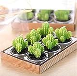 Weili 6pcs / Set decoración de la casa Rare Cactus Mini Vela Tabla Vela Jardín Boda Velas de simulación Planta de decoración Duftkugeln refresco relaje la presión Gift Set,si