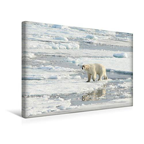 CALVENDO Eisbären - Könige der Arktis