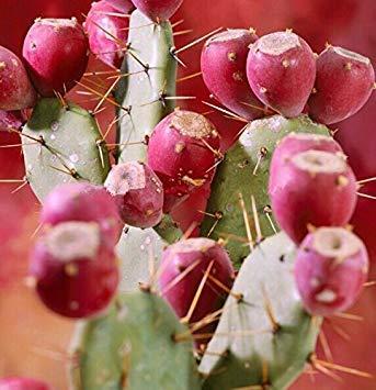 seedsown . Semillas Mini bonsais álamo Una Buena opción para familias Absorber Semillas formaldehído Buxus Maceta árbol Chino del boj 100 Piezas: Mezclar