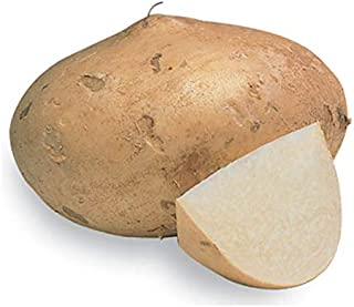 Jicama Root Seeds - 20 Large Seeds. Jicama Plants Produce Several Bulbs Like Potatoes