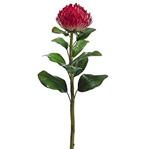 CC Home Furnishings Club Pack of 12 Artificial Red Needle Protea Silk Flower Stems 28″