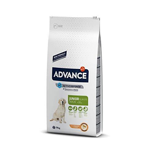 ADVANCE Adult Maxi - Pienso Para Perros Junior De Razas Grandes Con Pollo- 14 kg