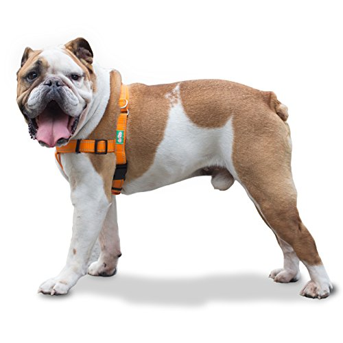 GoPets Professional Quality No Pull Dog Harness