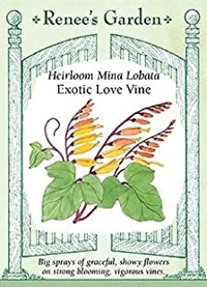 Mina Lobata - Exotic Love Vine Seeds