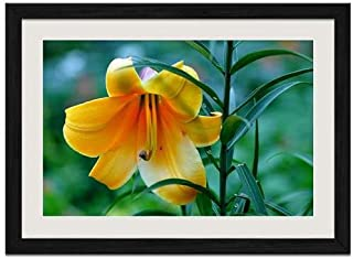 Beautiful Yellow Lily - Art Print Wall Black Wood Grain Framed Picture(20x14inch)