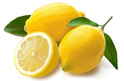 20 graines naines Lemon Tree - plantes d'extérieur, bricolage jardin Bonsai, 14 parfumé