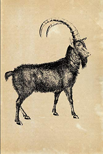 Alpine Ibex (Capra ibex): Vintage Animal Illustration Lined Notebook and Diary