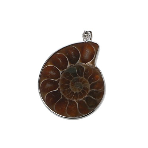 jingmeizi Natural Stone Ammonite Fossils Seashell Snail Pendants Loose Gemstone Beads DIY