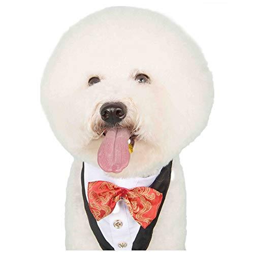 Stock Show - Collar de Diadema para Perros pequeños, medianos, con Lazo y Botella Ajustables, Ideal para Bodas, Fiestas, Disfraces, Regalo y cumpleaños